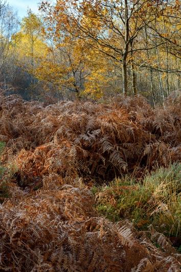 Autumn's End, Hesworth Common