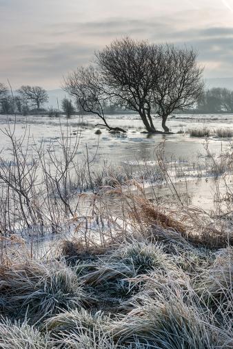 Frozen Amberley Wildbrooks