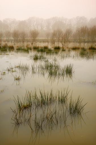 Winter floods, Fittleworth