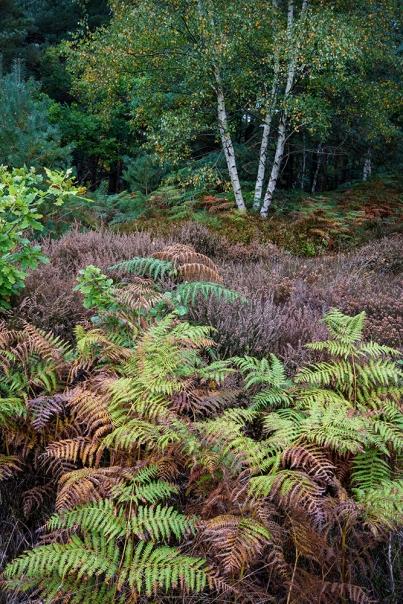 Autumn, Hesworth Common