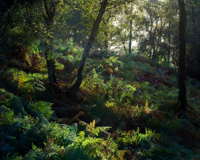 Autumnal magic, Hesworth