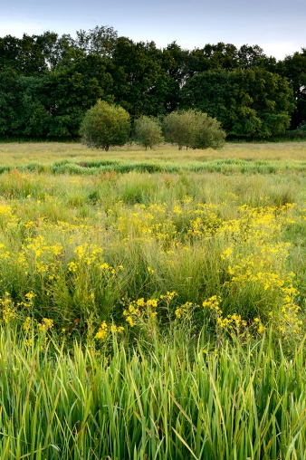 Water meadow, Fittleworth