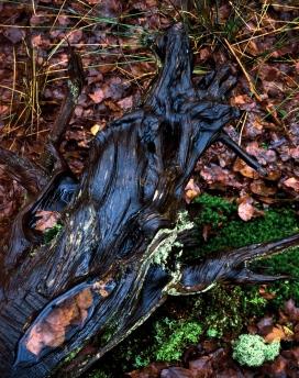wood detail, arne, dorset