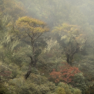 Cloud Forest, Langtang Valley, Nepal