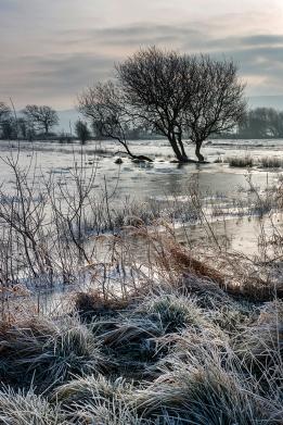 Dawn Frost, Amberley Wildbrooks
